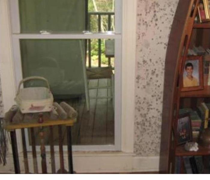 What To Know About Mold Remediation In Your Home Before