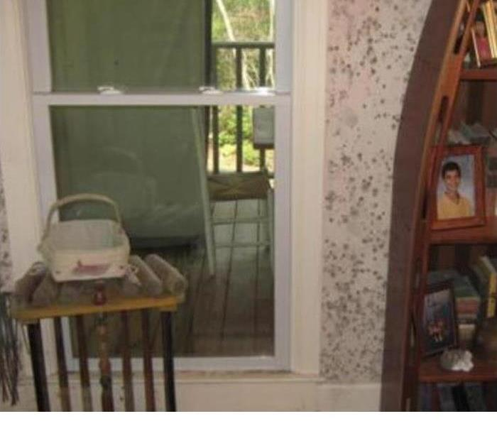 Sitting Room Mold