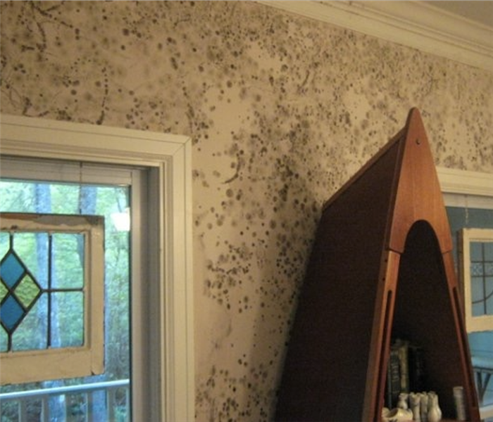 Mold in Your Johnson City Home?