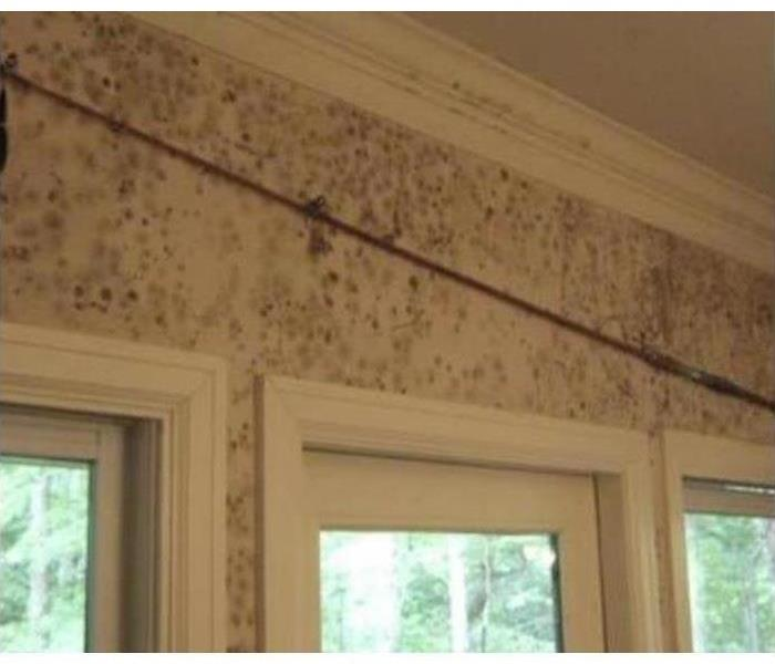 Mold Remediation 5 Steps To Assess Mold Damage