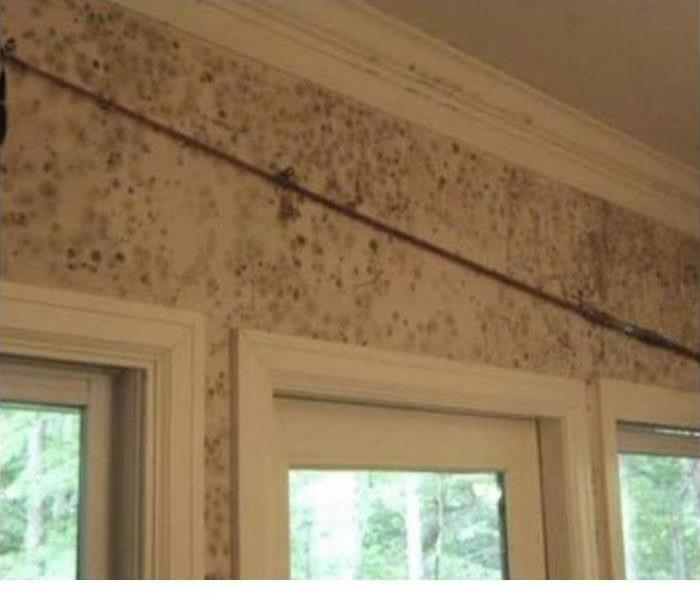 Black mold contamination through out the walls of a home